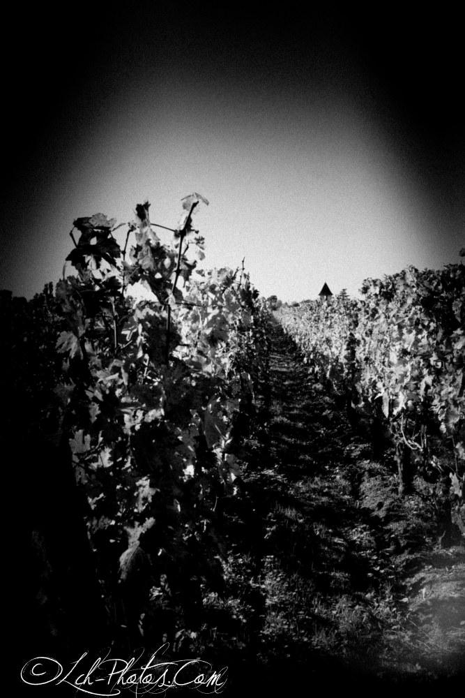 L'automne au Chateau Pape Clément, Déclinaison de couleurs sur les vignes (6/6)